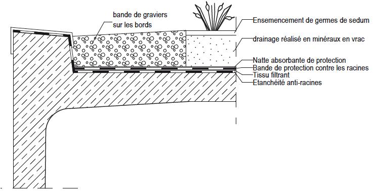 Schéma végétalisation avec germes de sédums